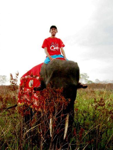 Naik gajah di Taman Nasional Way Kambas, Lampung