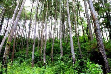 Hutan Prapatan