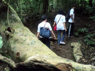 Hutan Adat Mandala nan rimbun dengan bonggol yang besar-besar