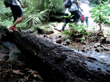 Melintasi pohon tumbang yang melintang di dalam hutan adat